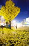 [WIDE SHOT] 노란 낙엽비가 우수수…가을이 떠나간다