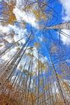 [포토에세이] 손짓하는 귀족 나무
