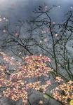 [WIDE SHOT] 낙엽배를 타고 떠나는 가을, 내년에 또 봅시다