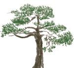 [도청도설] 남북 소나무 연대