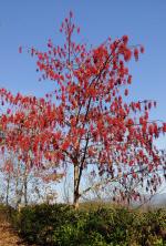 경남산림환경연구원, '이나무 가로수길' 개방