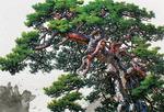 [아침의 갤러리] pine tree-구명본 作