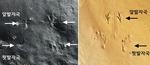 진주서 세계 最古 개구리 발자국 화석