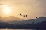 [포토에세이] 으뜸 철새의 비행