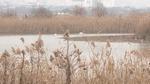 낙동강 하구를 생태 자산으로 <2> 사람과 새가 말하는 하구 습지의 현재