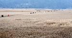 낙동강 하구를 생태 자산으로 <5> 람사르 습지 순천만을 가다