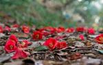 '지심도' 동백숲 동굴 들어서면 떨어진 붉은 꽃 피해가기도 힘들어