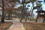 의령 신포숲·하동 십일천송, 국가산림문화자산 됐다