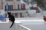 [펫 칼럼] 재개발에 내몰린 길고양이들, 함께 살 수 있는 대안은 없나