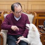 [펫 칼럼] 입양의 책임감, 사람과 동물 행복한 공존 위한 조건