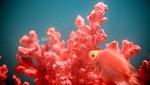 올해의 컬러 '리빙 코랄 (Living Coral)'…봄 물들이다