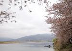 최원준의 그 고장 소울푸드 <26> 섬진강 벚굴