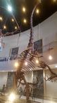 공룡 화석은 아이들 '취향저격', 쪽빛 남해에 어른은 '마음심쿵'