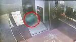 (영상)대형견 개물림 CCTV 보니…엎드려 고통스러워하는 남성