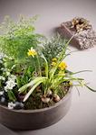 [시크릿 가든의 사계] 미니정원 만들 땐 습성 비슷한 식물끼리 나눠 심으세요