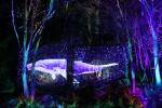 강원도 오크밸리 리조트, 야간 벚꽃 나들이객 위해 '소나타 오브 라이트' 운영