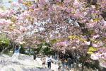 부산여행 탐구생활 <16> 민주공원 겹벚꽃과 숲길