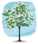 [도청도설] 이팝나무의 전설