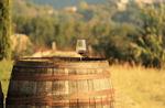 [최태호의 와인 한 잔] 와인 숙성과 설렘