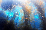 바다가 미래다…지속 가능한 해양수산업 생태계 만든다