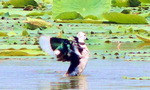 창원 주남지서 국내 미기록 오리과 조류 발견