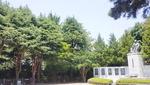 동백섬 최치원 동상 수호나무가 외래종이라니…