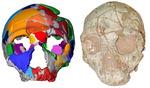 그리스 21만년 전 호모사피엔스 유골, 기존 학설보다 더 일찍 유럽정착 추정