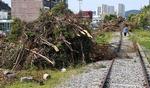 폐선부지 수목 제거 놓고 환경훼손 논란