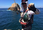 [조황] 울산 간절곶 앞바다 농어 '폭풍 입질'