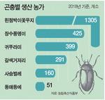 내년 국내 곤충산업 시장 5363억 규모 예상…'꽃벵이' 사육 55.9% 차지 인기