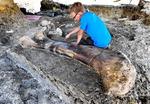 프랑스 둘리 엄마로 유명한 사우로포드 화석 발견