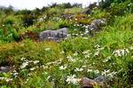 지리산 능선…가을 알리는 야생화 만개