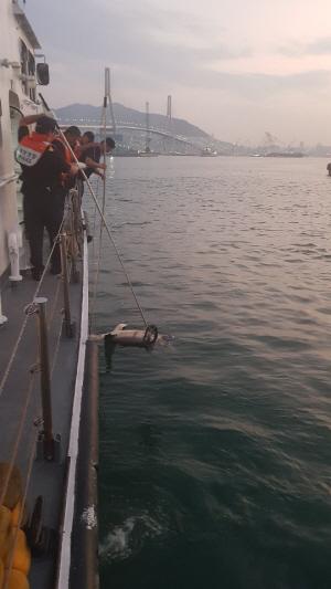 """부산 앞바다에서 """"청새리상어"""" 죽은 채 발견..공격성 높은 상어 출현은 처음"""