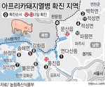 DMZ 멧돼지 사체서 돼지열병 감염 첫 확인