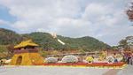 양산 국화축제 26일부터 16일간