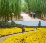 대숲 지나니 국화의 바다…도심 복판 이색 정원이 30여 곳