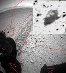 """""""화성서 생명체 흔적 찾았다"""" 미국 곤충학자 주장"""