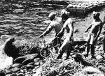 일제가 멸종시킨 독도강치 기리는 전시 열린다