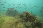 올 한해 여의도 9.5배 바다숲 조성한다