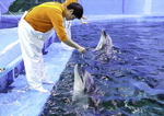 고래생태체험관서 태어난 아기 돌고래 소개합니다