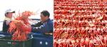 최원준의 음식 사람 <4> 울진 붉은대게와 동해안 대게