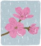 [도청도설] 봄꽃, 피나 지나