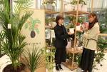 '집콕' 숨통 트이는 공기정화식물