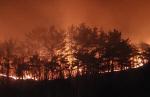 """서산시 대산읍서 산불 발생 12시간 만에 진화…""""인명·시설물 피해 없어"""""""