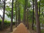 복원된 '송정옛길', 부산환경공단 '고흐의 길'에서 출발하세요!