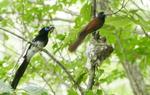 울산 문수산서 발견된 멸종위기 긴꼬리딱새