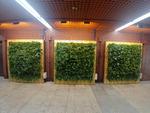 허브동산, 부전역 내 미세먼지 줄이는 벽면녹화 설치