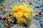 이달의 해양생물에 '미립이분지돌산호'