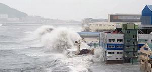 연이은 태풍에…해안가 기업들 피해 '억'소리'