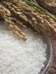 [박상현의 끼니] 맛있는 밥을 위한 쌀 선택 기준